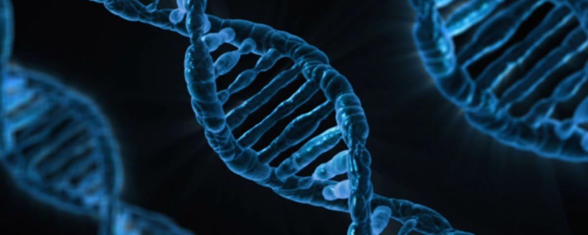Fachseite Biologie – 4 Von 4